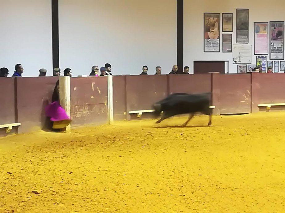 bolsintaurino-segunda-tienta-2018-7